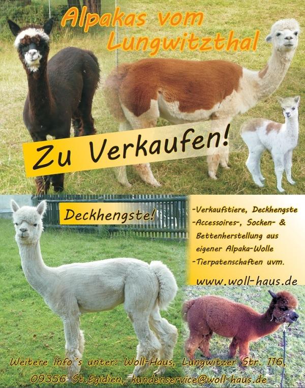 Alpakas Sachsen kaufen